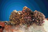 Kupferkieskristalle auf Quarz, Gr. Füsseberg, Sgl. N. Stoetzel, Foto Jeff Scovil, USA,